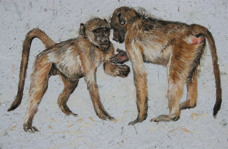 "<span style=""float:left"">The Conversation ~ Chacma Baboon</span> <span style=""float:right""><a href=""https://www.carolbarrett.co.uk/paintings/the-conversation-yellow-baboon/?from=/hippos-and-primates/"">More info »</a></span>"