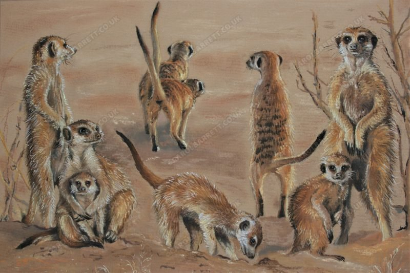 "<span style=""float:left"">United Meerkats</span> <span style=""float:right""><a href=""https://www.carolbarrett.co.uk/paintings/united-meerkats/?from=/african-wildlife-for-sale/"">More info »</a></span>"
