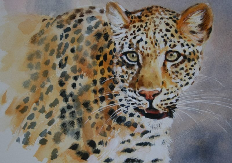 "<span style=""float:left"">Solo, South Luangwa Leopard ~ Sale proceeds were donated to Explorers against Extinction</span> <span style=""float:right""><a href=""https://www.carolbarrett.co.uk/paintings/solo-female-leopard/?from=/big-cats-for-sale/"">More info »</a></span>"
