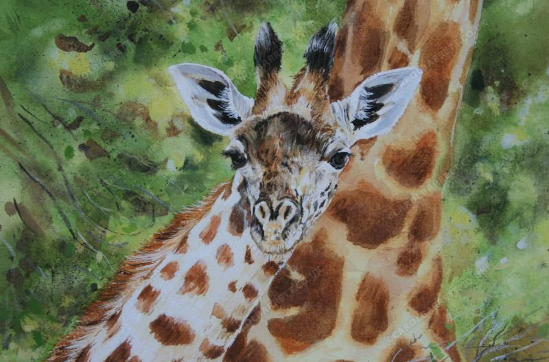 "<span style=""float:left"">Young Twiga ~ Thornicroft's Giraffe</span> <span style=""float:right""><a href=""https://www.carolbarrett.co.uk/paintings/twiga-calf-thornicrofts-giraffe/?from=/african-wildlife-for-sale/"">More info »</a></span>"