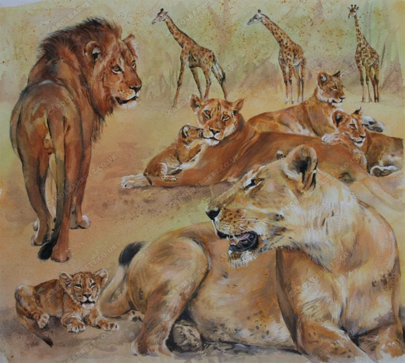 "<span style=""float:left"">Sacred Valley Pride ~ Total sale price will be donated to Born Free</span> <span style=""float:right""><a href=""https://www.carolbarrett.co.uk/paintings/sacred-valley-pride/?from=/big-cats-for-sale/"">More info »</a></span>"
