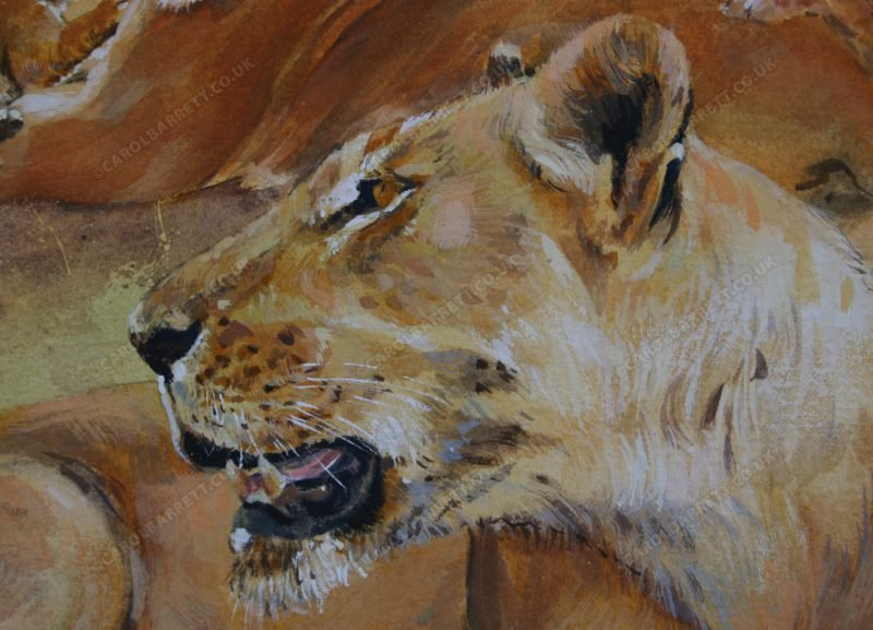 "<span style=""float:left"">Sacred Valley Pride (detail)</span> <span style=""float:right""><a href=""https://www.carolbarrett.co.uk/paintings/sacred-valley-pride-detail/?from=/big-cats-for-sale/"">More info »</a></span>"