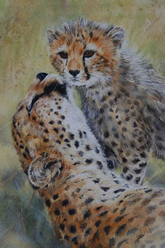 "<span style=""float:left"">Cheetah Caress ~ Total sale proceeds will be donated to The Cheetah Conservation Fund (CCF)</span> <span style=""float:right""><a href=""https://www.carolbarrett.co.uk/paintings/cheetah-caress-2/?from=/cheetah-for-sale/"">More info »</a></span>"