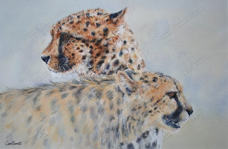 """<span style=""""float:left"""">Cheetah Spirit ~ Total Sale will be donated to the Cheetah Conservation Fund</span><span style=""""float:right""""><a href=""""https://www.carolbarrett.co.uk/paintings/disappearing-icon/?from=/cheetah-for-sale/"""">More info »</a></span>"""