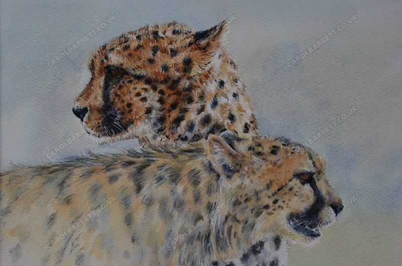 "<span style=""float:left"">Cheetah Spirit ~ Total sale proceeds will be donated to The Cheetah Conservation Fund (CCF)</span> <span style=""float:right""><a href=""https://www.carolbarrett.co.uk/paintings/disappearing-icon/?from=/cheetah-for-sale/"">More info »</a></span>"