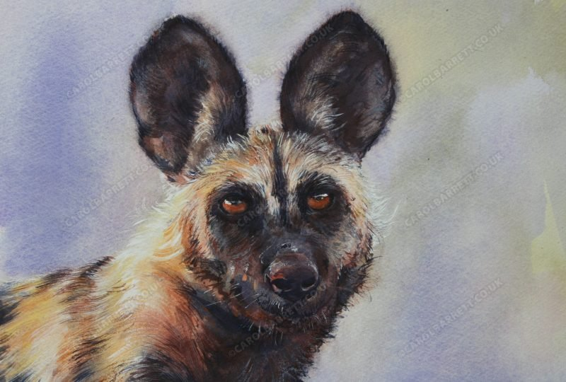 "<span style=""float:left"">African Myth (Painted wolf)</span> <span style=""float:right""><a href=""https://www.carolbarrett.co.uk/paintings/african-myth-painted-wolf/?from=/wild-dog-hyena-for-sale/"">More info »</a></span>"