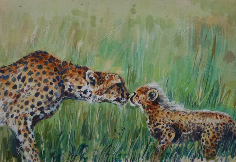 """<span style=""""float:left"""">Cherished Kit</span><span style=""""float:right""""><a href=""""https://www.carolbarrett.co.uk/paintings/cherished-kit-total-sale-price-will-be-donated-to-the-cheetah-conservation-fund/?from=/cheetah-for-sale/"""">More info »</a></span>"""