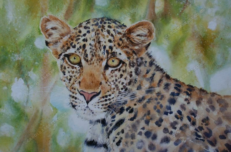 """<span style=""""float:left"""">Amour ~ Ruaha Leopard</span><span style=""""float:right""""><a href=""""https://www.carolbarrett.co.uk/paintings/amour-ruaha-leopard/?from=/big-cats-for-sale/"""">More info »</a></span>"""