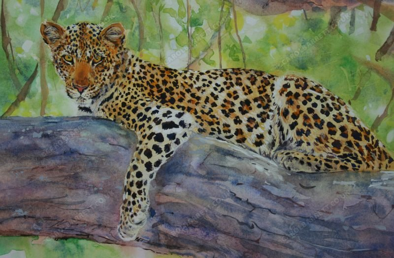 """<span style=""""float:left"""">Ruaha Jewel</span><span style=""""float:right""""><a href=""""https://www.carolbarrett.co.uk/paintings/ruaha-jewel/?from=/big-cats-for-sale/"""">More info »</a></span>"""