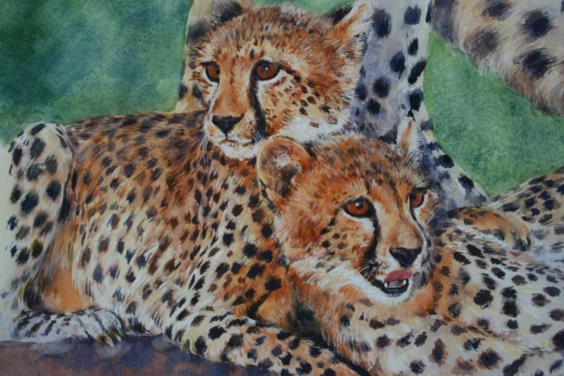 """<span style=""""float:left"""">Inseparable Siblings</span><span style=""""float:right""""><a href=""""https://www.carolbarrett.co.uk/paintings/inseparable-kits/?from=/cheetah-for-sale/"""">More info »</a></span>"""