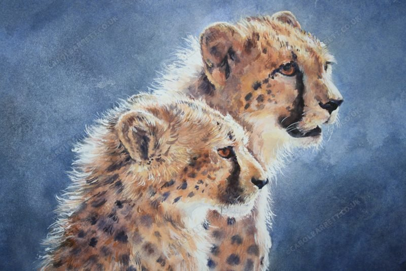 """<span style=""""float:left"""">Watch and Learn ~ Total sale will be donated to the Cheetah Conservation Fund</span><span style=""""float:right""""><a href=""""https://www.carolbarrett.co.uk/paintings/watch-and-learn/?from=/cheetah-for-sale/"""">More info »</a></span>"""