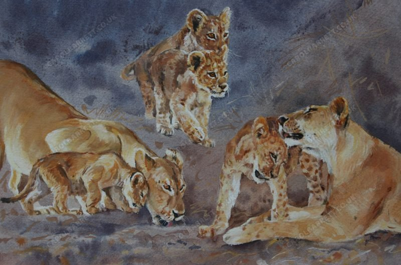 """<span style=""""float:left"""">Doting Lioness ~ Total proceeds were donated to Born Free</span><span style=""""float:right""""><a href=""""https://www.carolbarrett.co.uk/paintings/doting-lioness/?from=/big-cats-for-sale/"""">More info »</a></span>"""