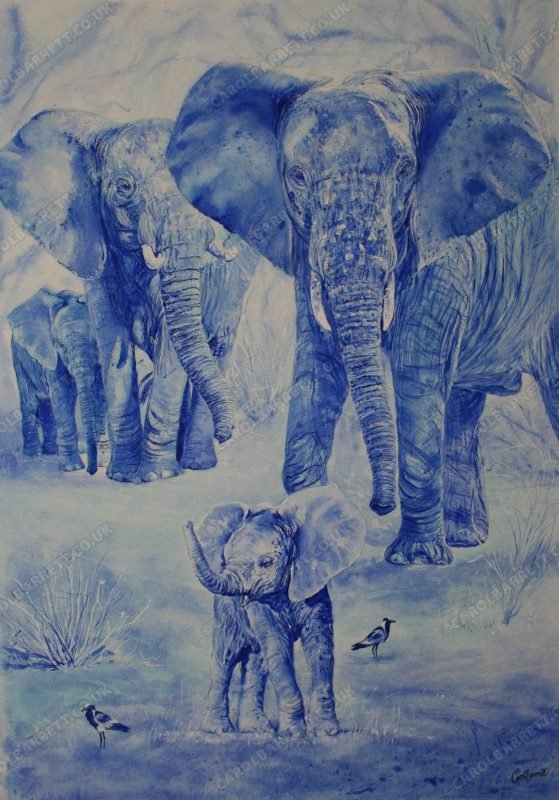 """<span style=""""float:left"""">In Blue ~ 2021 Sketch for Survival Invitational Collection</span><span style=""""float:right""""><a href=""""https://www.carolbarrett.co.uk/paintings/in-blue/?from=/african-wildlife-for-sale/"""">More info »</a></span>"""